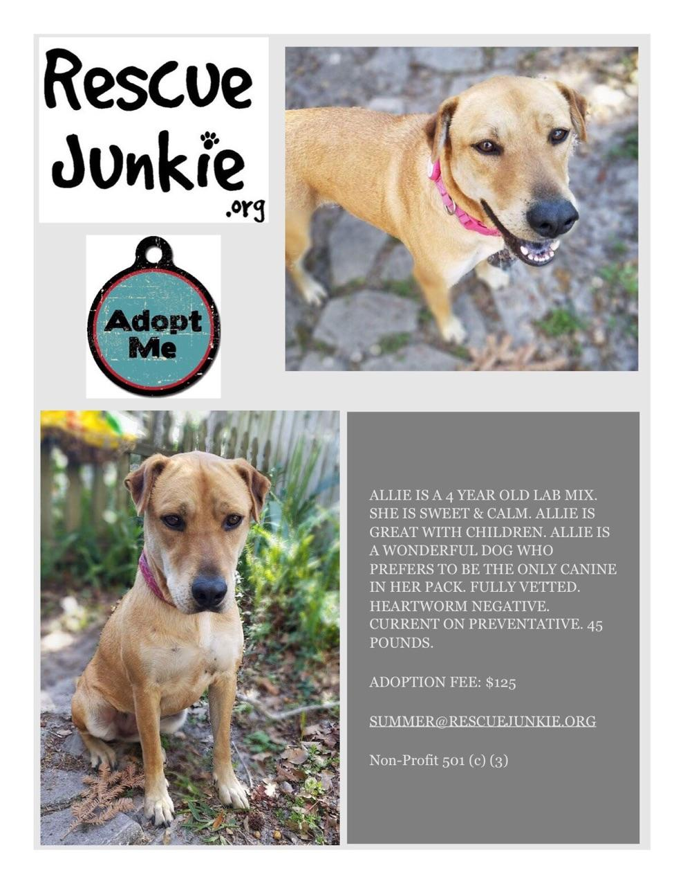 Rescue Junkie Inc Dogs up for Adoption